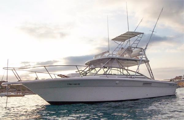 Sea Ray Amberjack 310