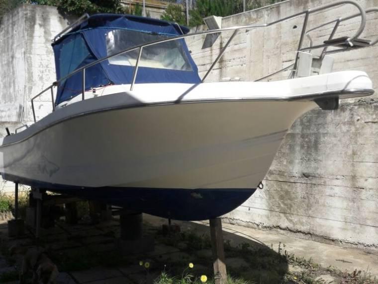 White Shark White Shark 236 WA