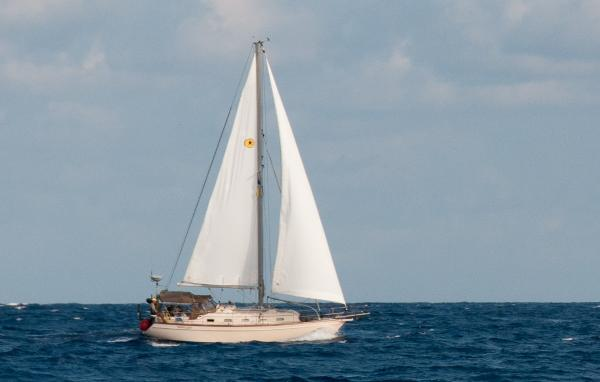 Island Packet 37 Sailing