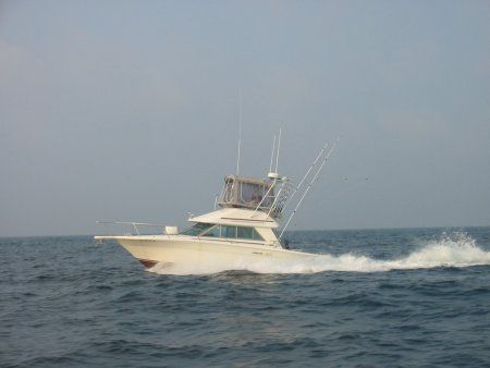 Sea Ray 310 Flybridge Sportfisherman Photo 1