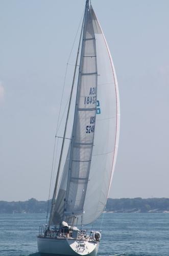 Sabre 38 Sailing