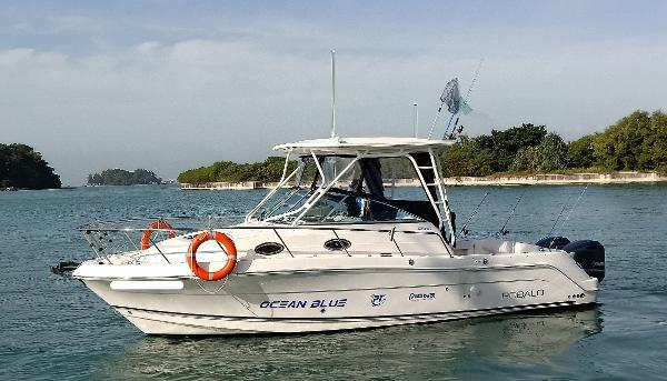 Robalo R305 Walkaround