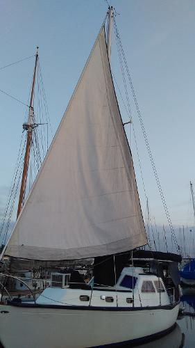 Islander 37 MS