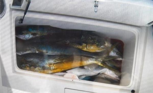 FISH BOXES IN COCKPIT - GOOD DAY