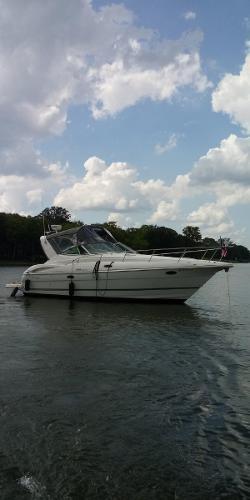Cruisers 320