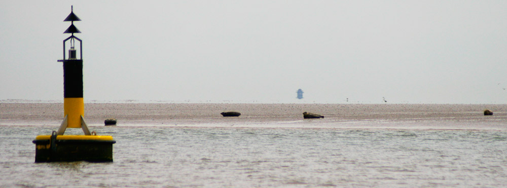 Seal colonies off Foulness Sands, River Crouch Essex
