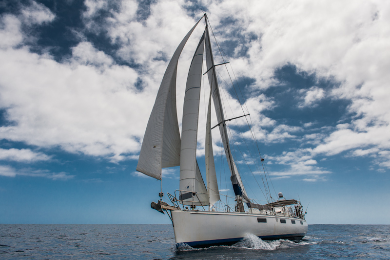 Sails: how to understand and buy sails