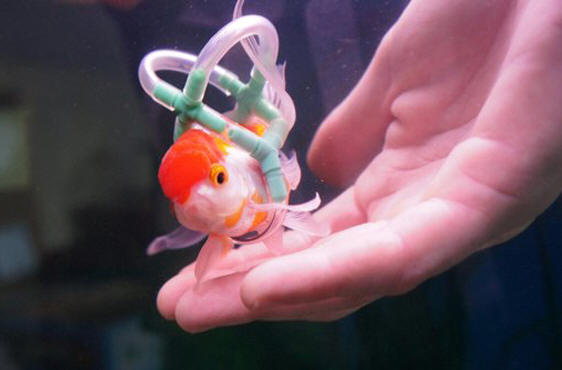 pet lifejackets – Einstein the fish