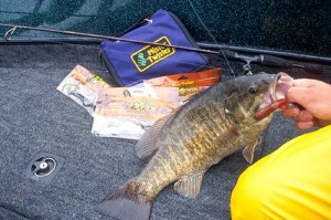 Soft-plastic tube lures are tops for Buffalo area smallmouths.