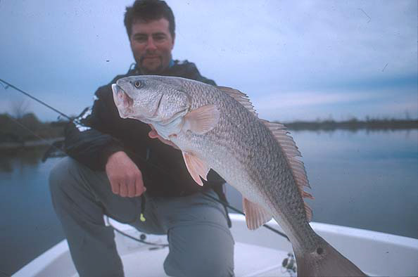 Cold-natured Redfish