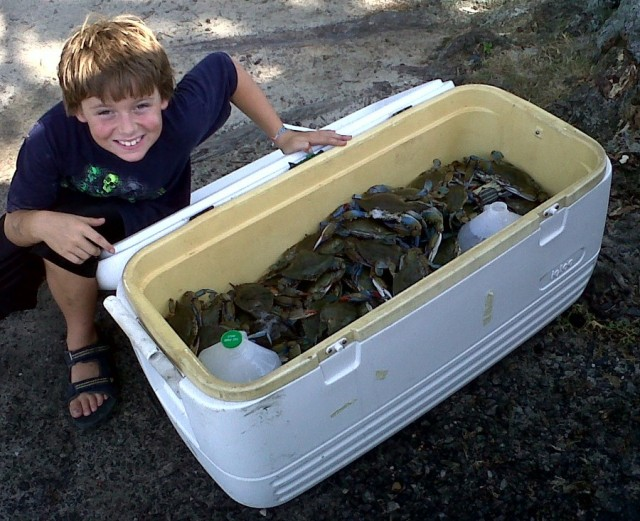 catching blue crabs