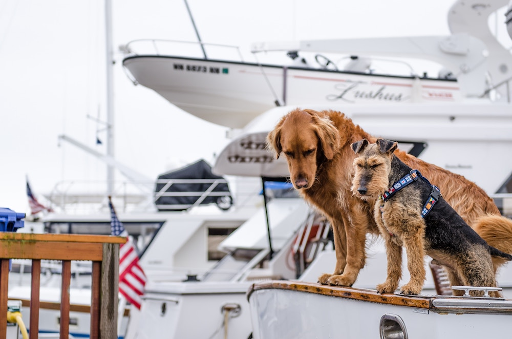 Boating with Dogs: Must-Know Tips for Boaters