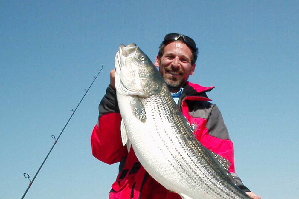 Striped bass are the pride of the Chesapeake.