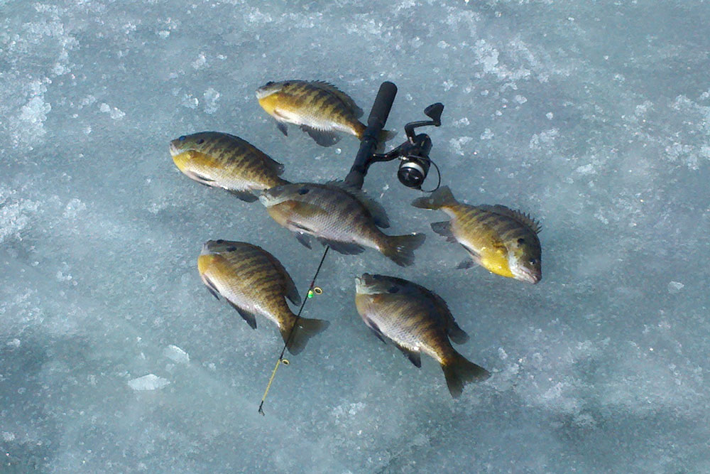 Ice Fishing: Everything You Need to Know