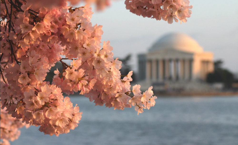 National Cherry Blossom Festival: Boating on the Potomac River