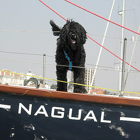 Portuguese Black Water Dog on board boat