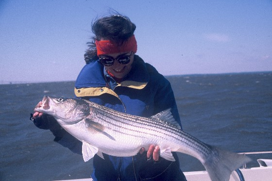 10 tips for striped bass fishing in the fall for Striped bass fishing tips