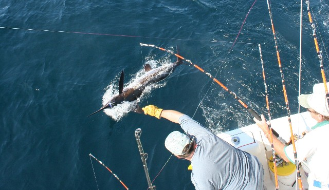 trolling for billfish
